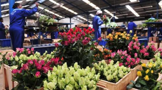 Mercado de flores en Kenia. Por elcomercio.com