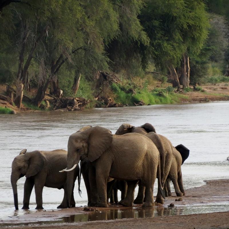 Elefantes refrescándose en Samburu. Por Charo