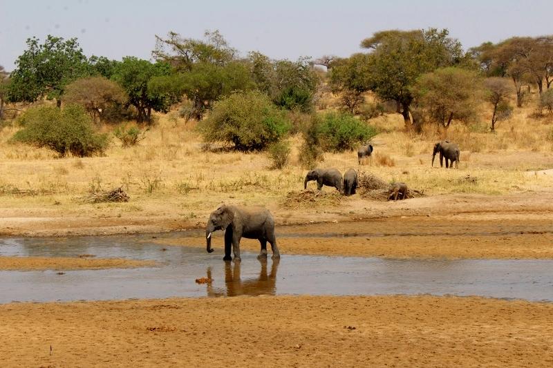 Disfrutando de los elefantes en Tarangire. Por Natalia