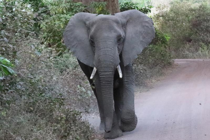 En la senda del Elefante. Por Toni