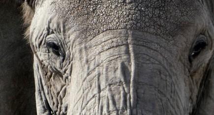 Elefante, su dominio en Tarangire. Por María