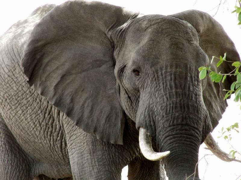 Elefantes en Ruaha. Por Angeles