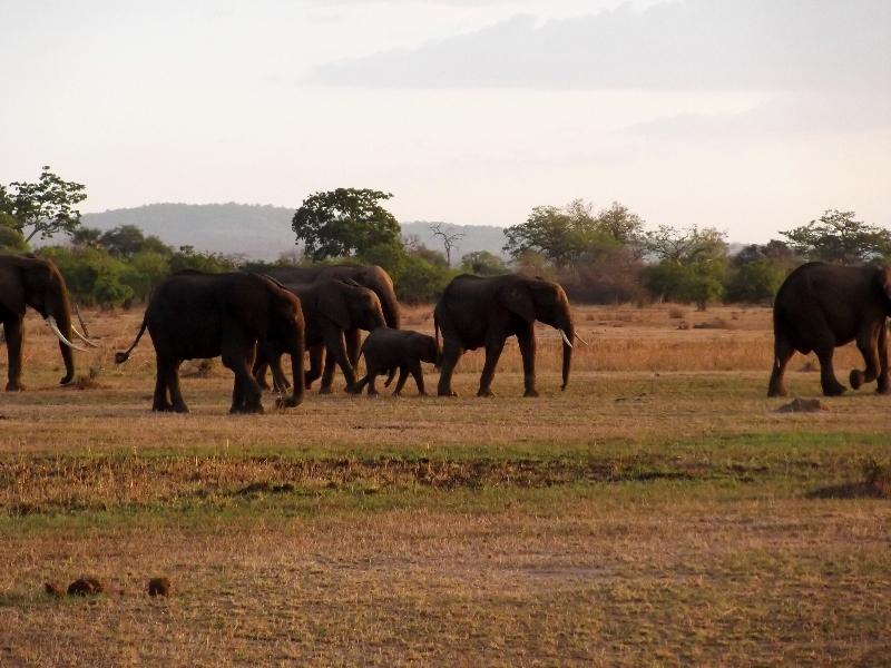 Elefantes en Mikumi. Por Angeles