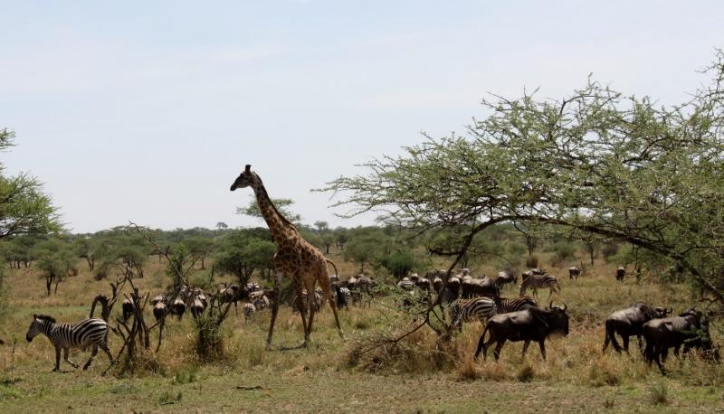 Grandes comunidades de diversas especies. Por Francisco