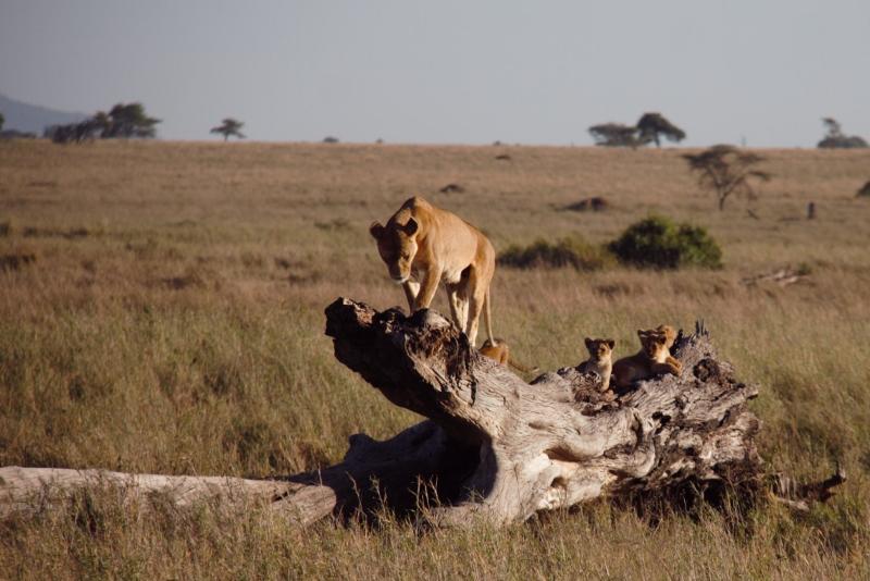 Una familia en Serengeti. Por Francisco