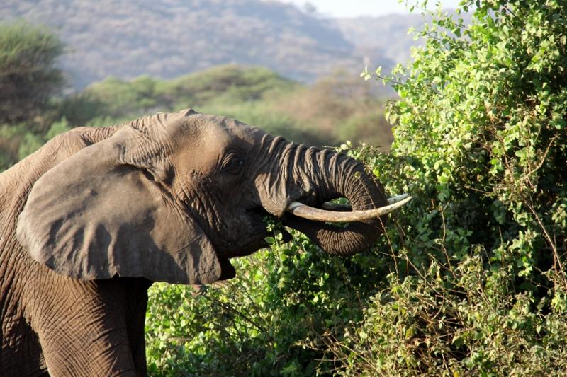 El elefante con su tranquilidad. Por Francisco