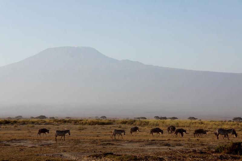 Las praderas de Amboseli con el Kilimanjaro de testigo. Por Francisco