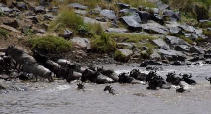 Cruce del río Mara. Por Azahara