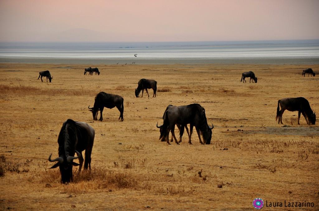 Ngorongoro. Por Laura