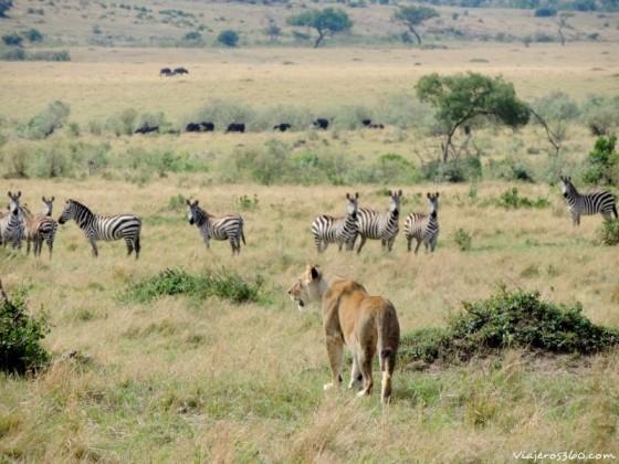 Un momento en un safari. Por Karina Revetria