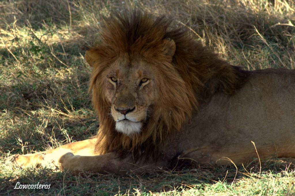 La mirada del león. Por Lucía