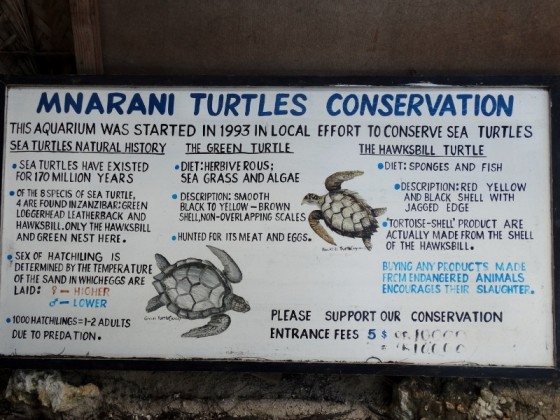 Mnarani Turtles Conservation. Por Udare