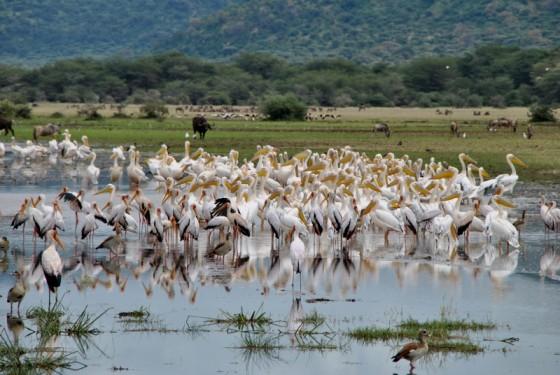 Lago Manyara. Por Gemma