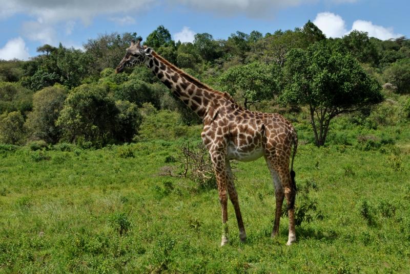 Parque Nacional de Arusha. Por Gemma