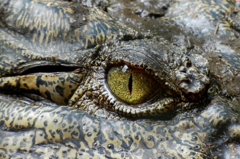 Detalle del ojo del cocodrilo