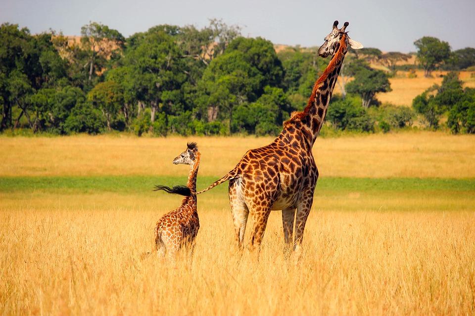 Una madre con su joven cría