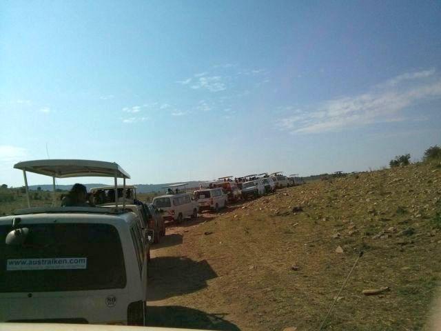 Atasco en Masai Mara. Por Cristina