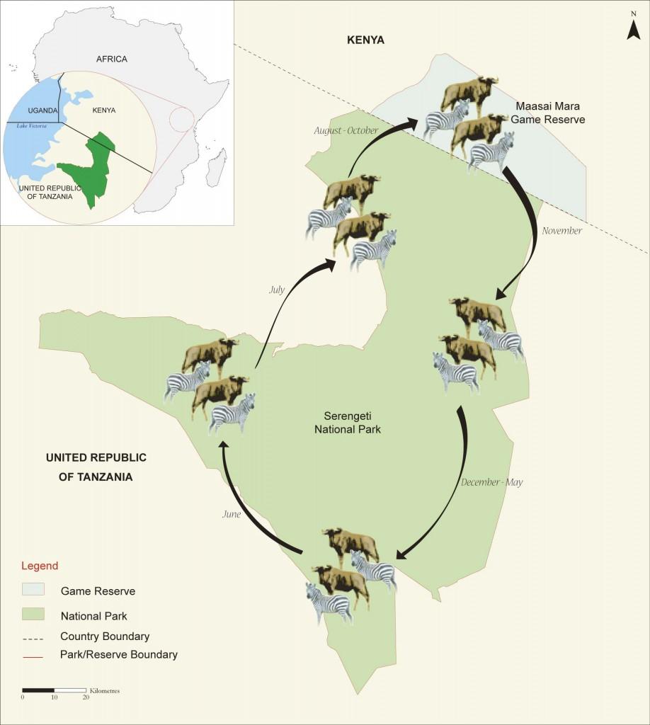 Ciclo migratorio. Por Kids Discover