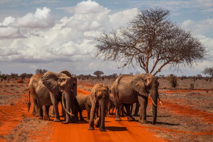 Elefantes. Por Cristina