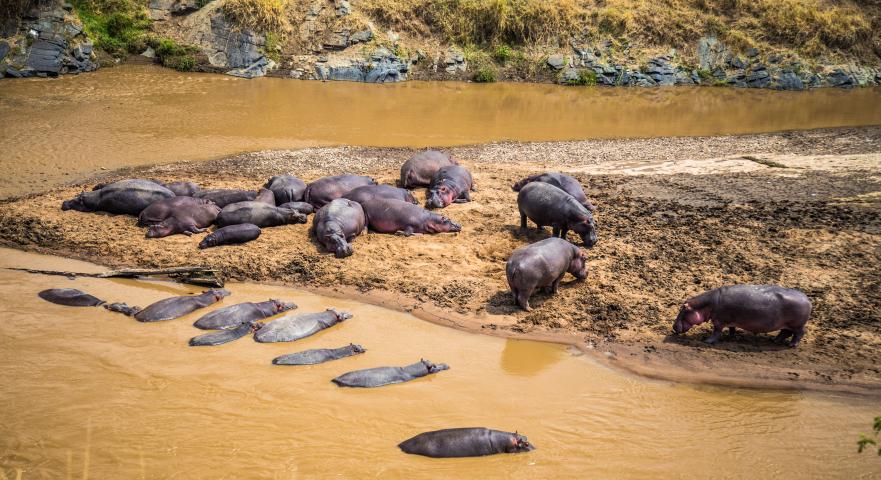 Hipopótamos. Por Cristina