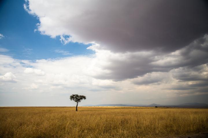 Masai Mara. Por Cristina