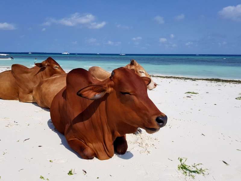 Playas de Zanzibar. Por Javier