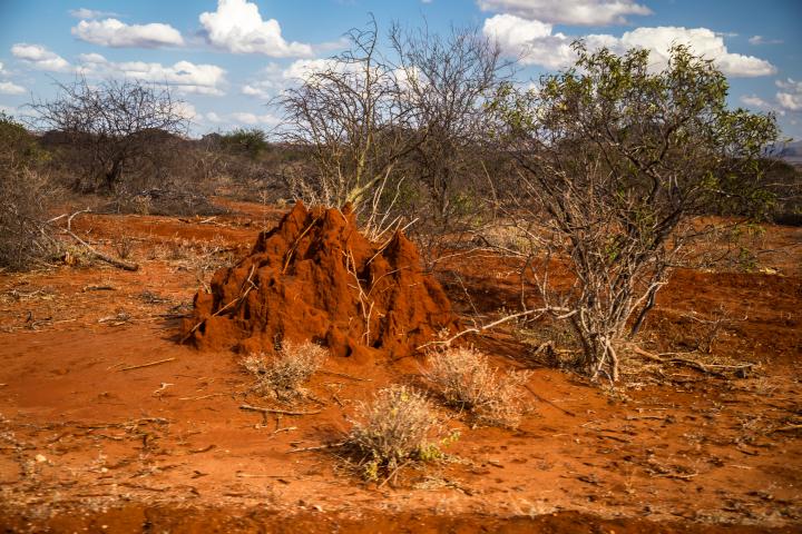 Termitero en Tsavo. Por Cristina