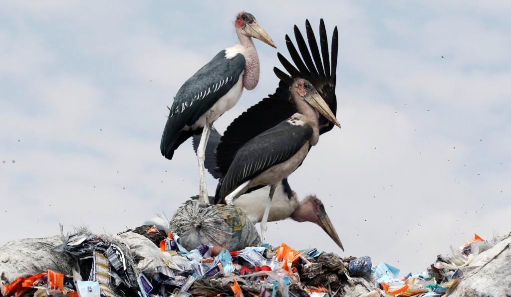 Conviviendo con la basura. Por Reuters
