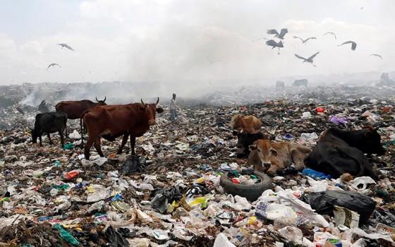 Ganado en Kenia en campos de plástico. Por Reuters