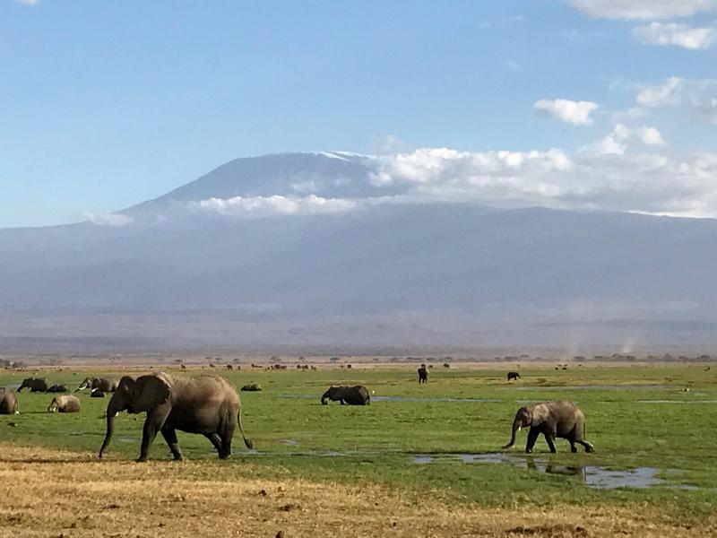 Amboseli, elefantes y Kilimanjaro. Por Guille