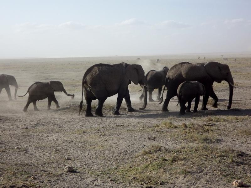 Elefantes en Amboseli. Por Paula