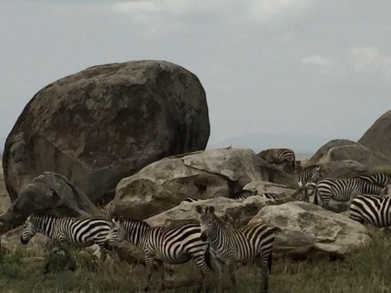 Serengeti. Por Eduardo