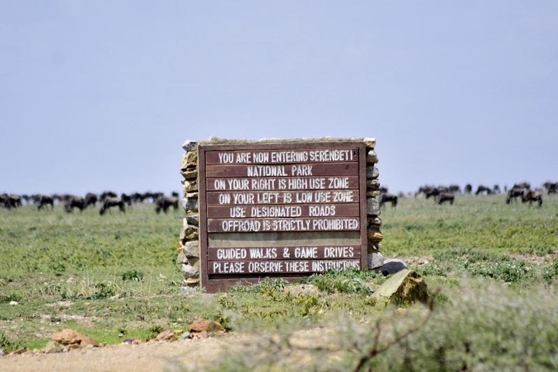 En Serengeti. Por Daniel