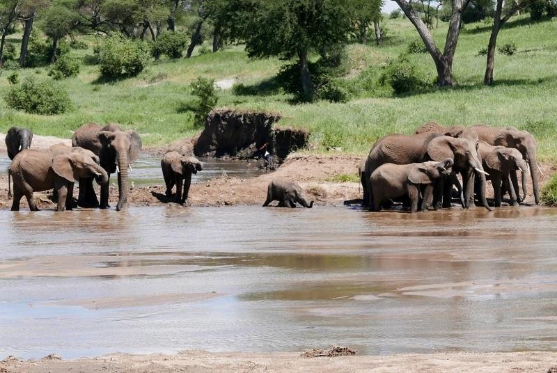 El baño de los elefantes en Tarangire. Por Victor