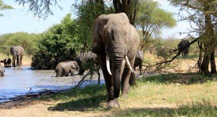 Elefante en el Tarangire. Por Fernando M