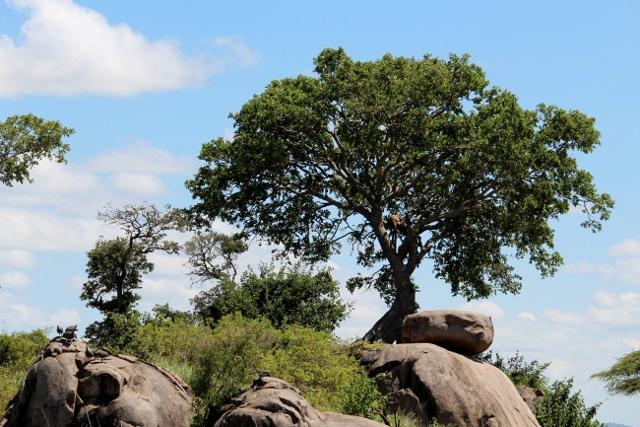 En Serengeti. Por Albert