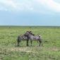 En la inmensidad del Serengeti. Por Elisa