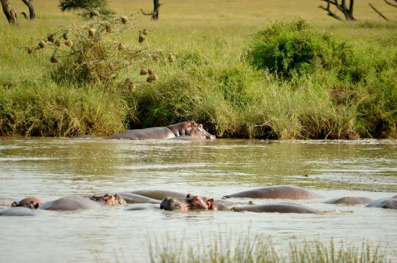 Ngorongoro. por Elisa