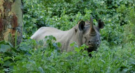 Momento único, el rinoceronte. Por Jorge