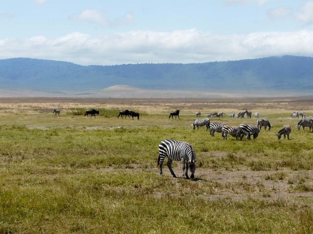 La caldera de Ngorongoro. Por Montse