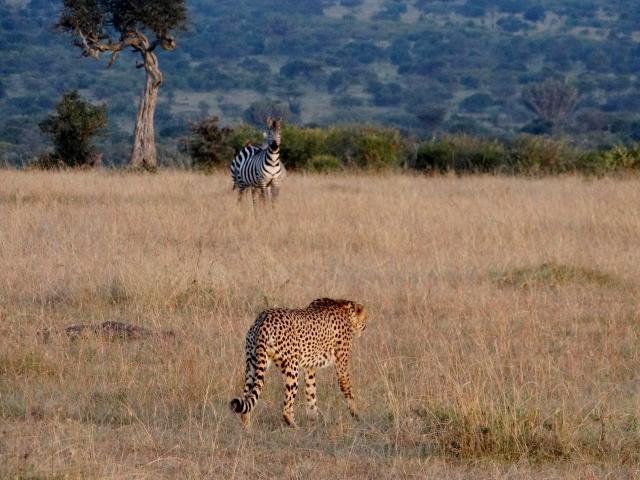Distancias en Masai Mara. Por Verónica