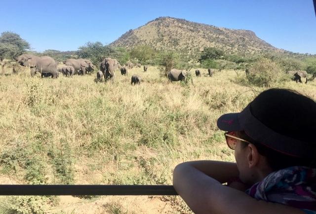 Manadas de elefantes en el P.N. del Serengeti. Por Noelia