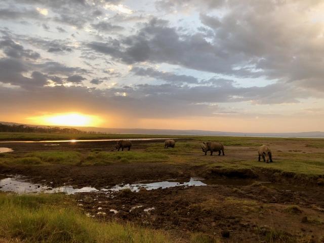 Nakuru. Por Verónica