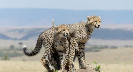 En Masai Mara. Por Gisela