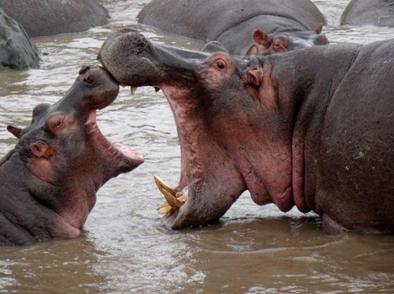Momentos de Serengeti. Por Ernesto
