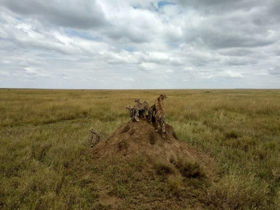 Serengeti. Por Ernesto