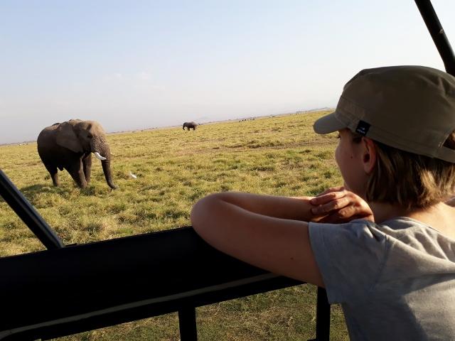 Elefante Amboseli. Por Itxaso