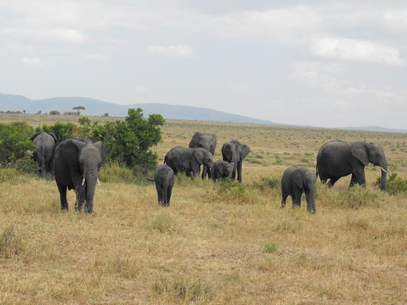 Familia de elefantes. Por Patricia