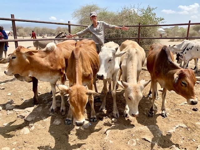 Comprando las vacas. Por Teresa