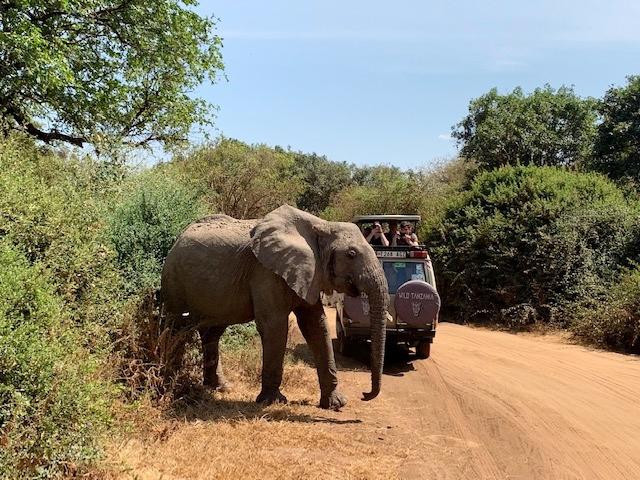 De safari en Ngorongoro. Por Teresa